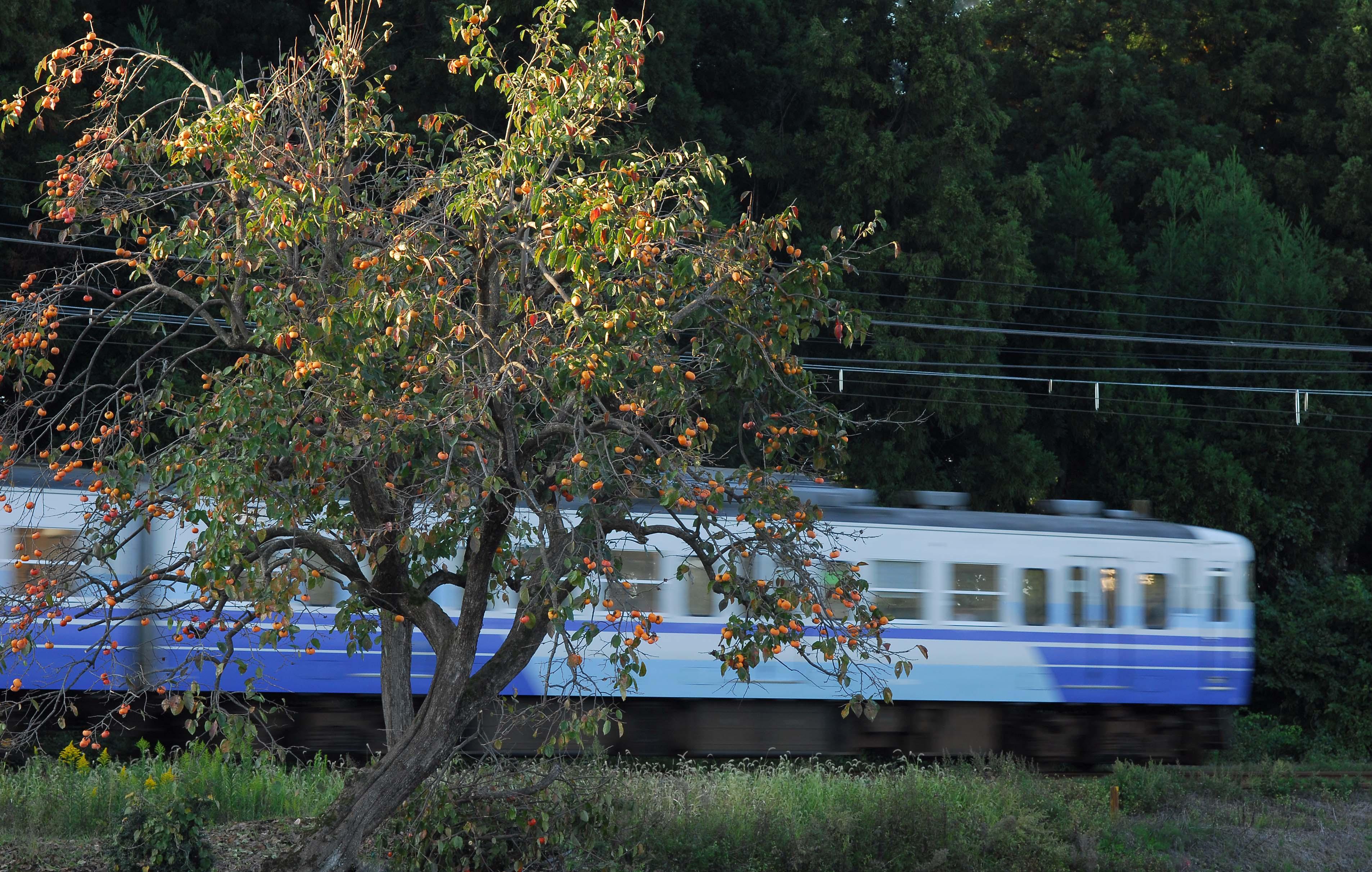 2009 10 12__2_2193_2.jpg